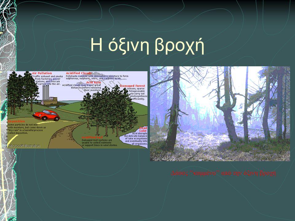 Δάσος ''καμμένο'' από την όξινη βροχή