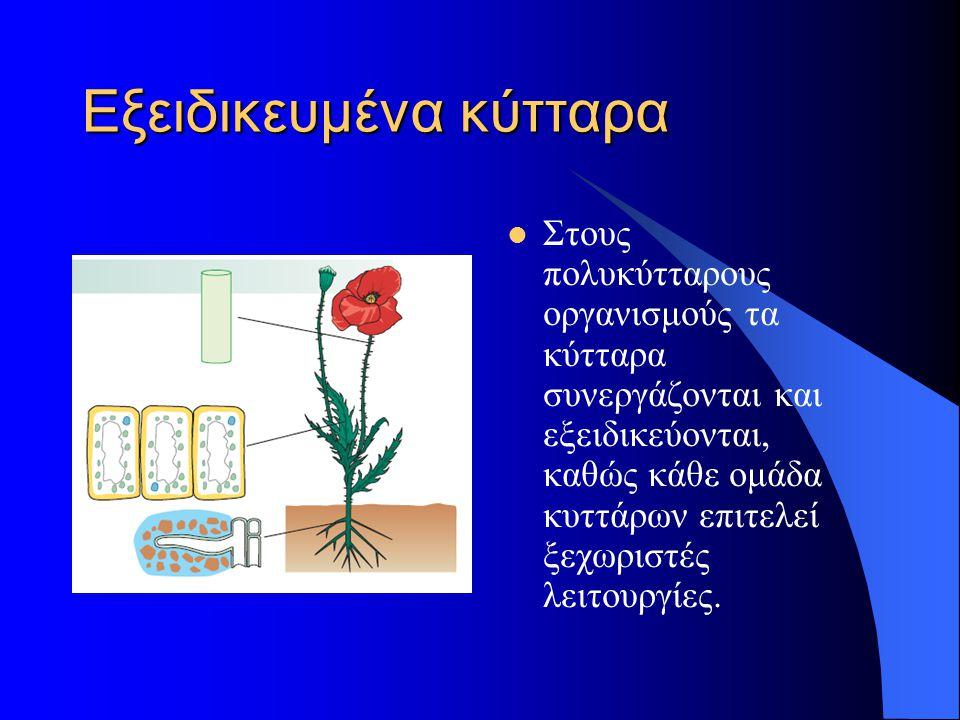 Εξειδικευμένα κύτταρα
