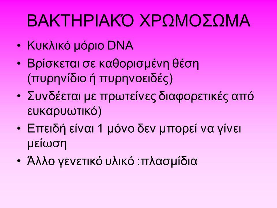 ΒΑΚΤΗΡΙΑΚΌ ΧΡΩΜΟΣΩΜΑ Kυκλικό μόριο DNA