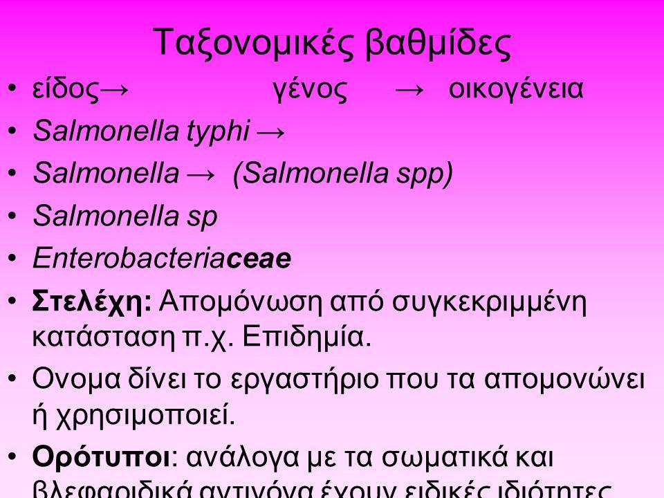 Ταξονομικές βαθμίδες είδος→ γένος → οικογένεια Salmonella typhi →
