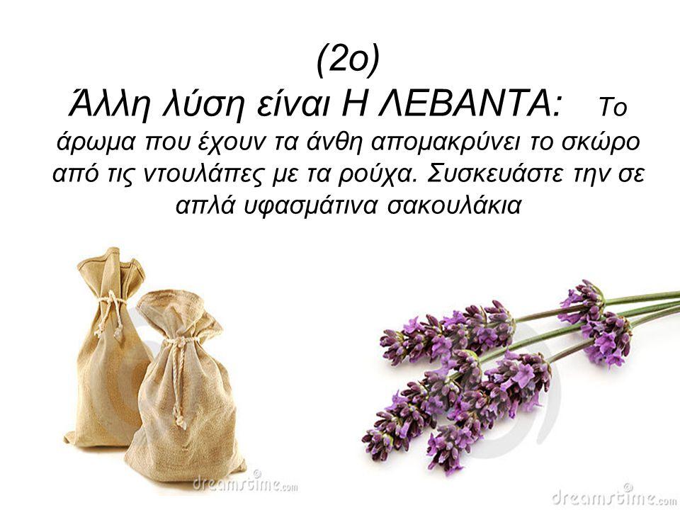 (2ο) Άλλη λύση είναι Η ΛΕΒΑΝΤΑ: Το άρωμα που έχουν τα άνθη απομακρύνει το σκώρο από τις ντουλάπες με τα ρούχα.