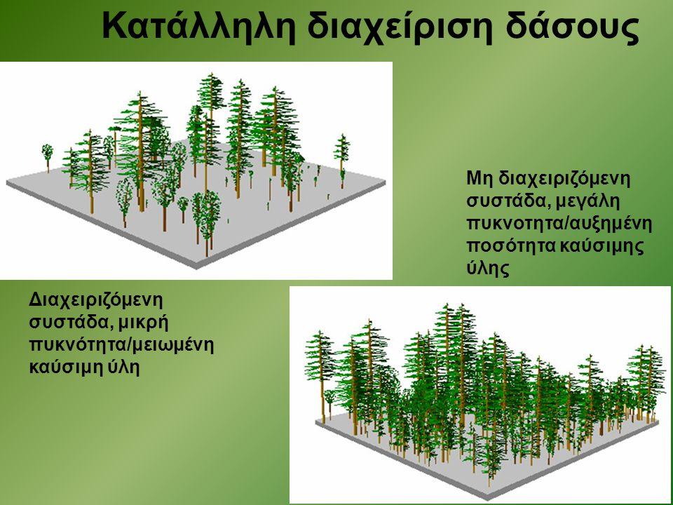 Κατάλληλη διαχείριση δάσους