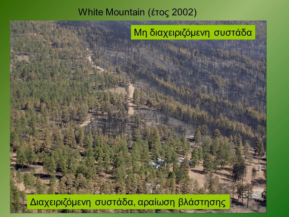 White Mountain (έτος 2002) Μη διαχειριζόμενη συστάδα Διαχειριζόμενη συστάδα, αραίωση βλάστησης