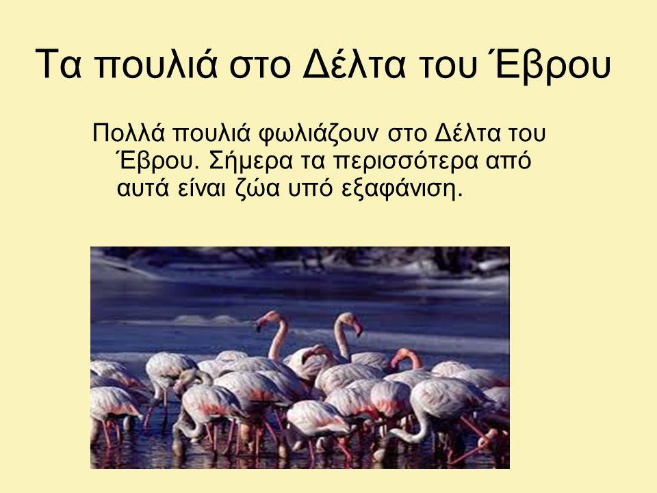 Τα πουλιά στο Δέλτα του Έβρου