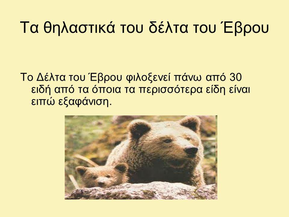 Τα θηλαστικά του δέλτα του Έβρου