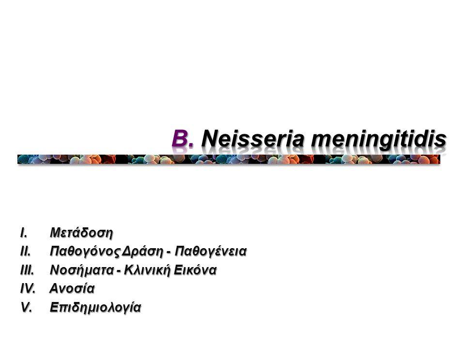 B. Neisseria meningitidis