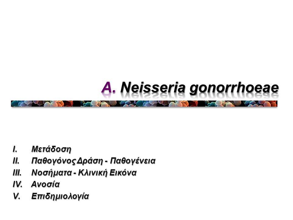 Α. Neisseria gonorrhoeae