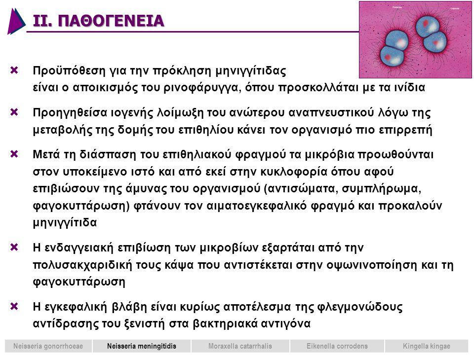 Neisseria gonorrhoeae Neisseria meningitidis Moraxella catarrhalis