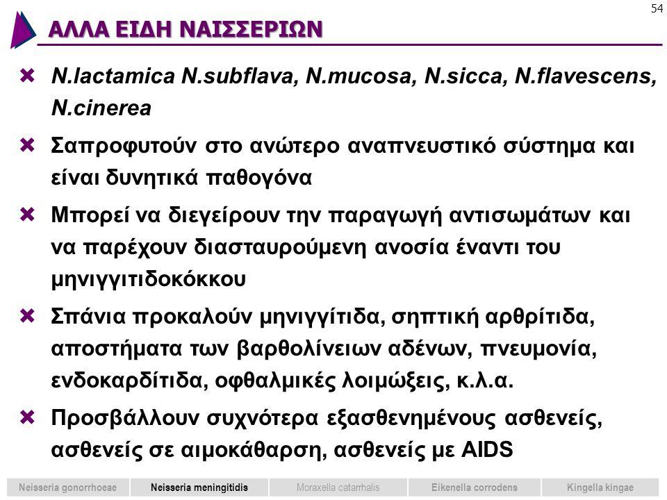 Neisseria gonorrhoeae Neisseria meningitidis