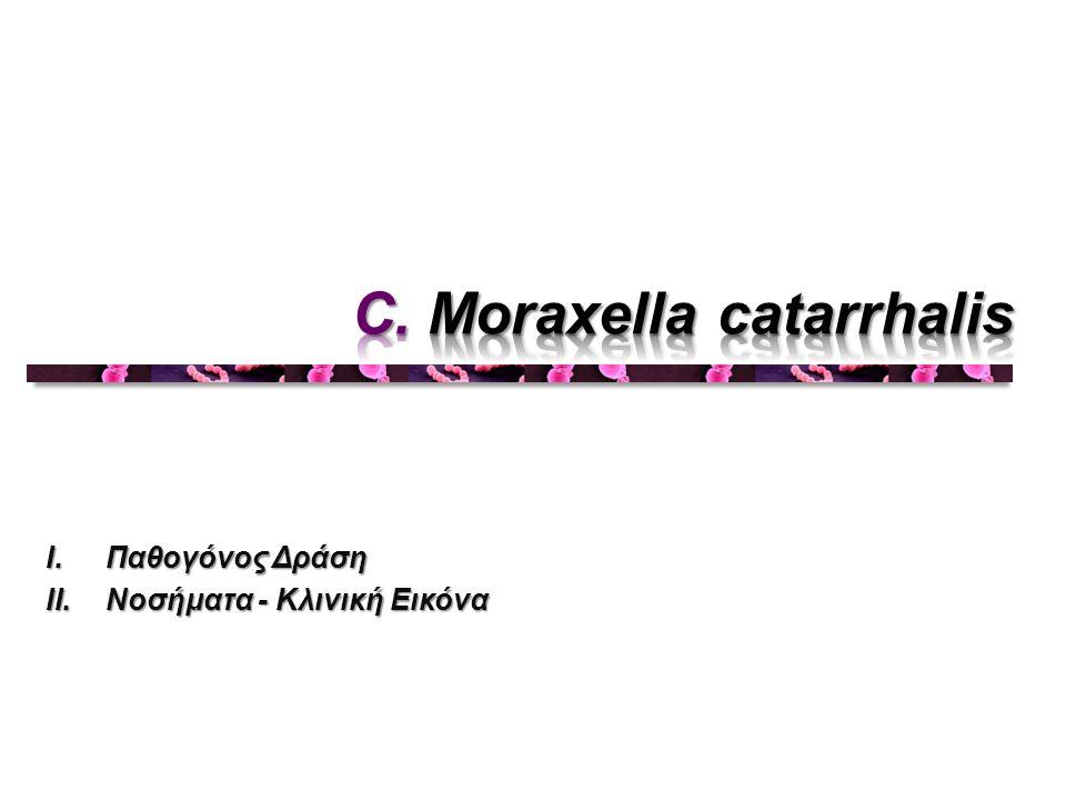 C. Moraxella catarrhalis