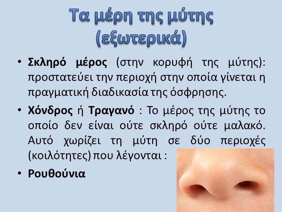 Τα μέρη της μύτης (εξωτερικά)