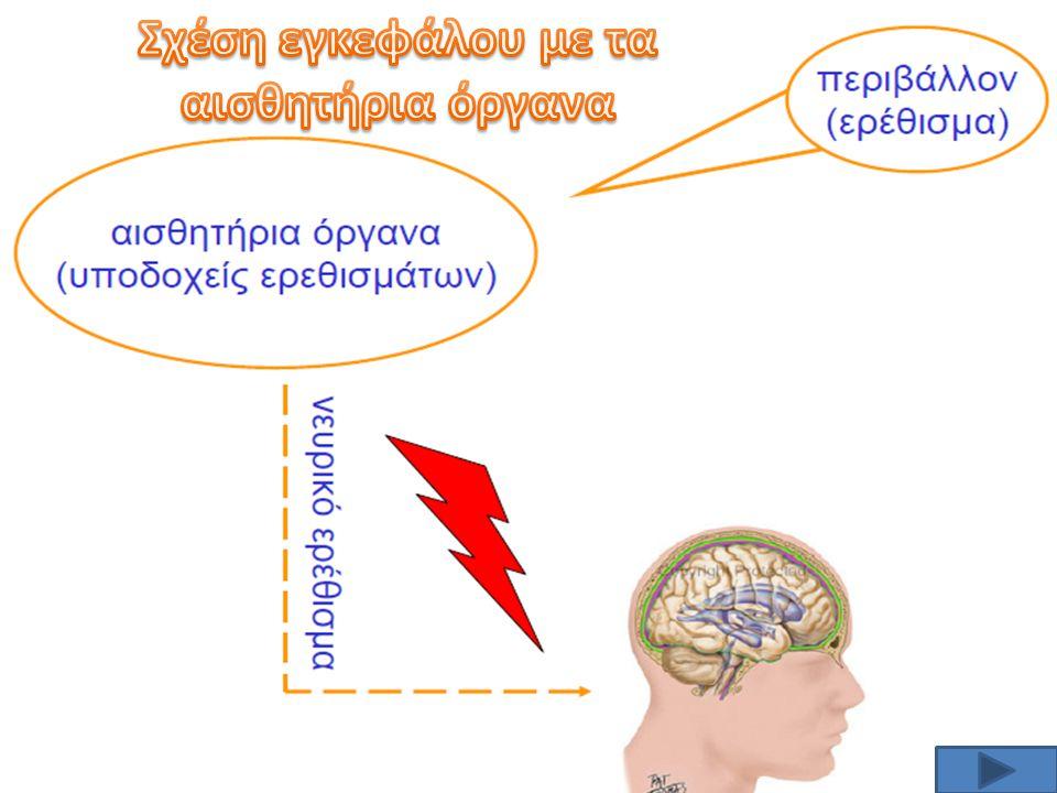 Σχέση εγκεφάλου με τα αισθητήρια όργανα