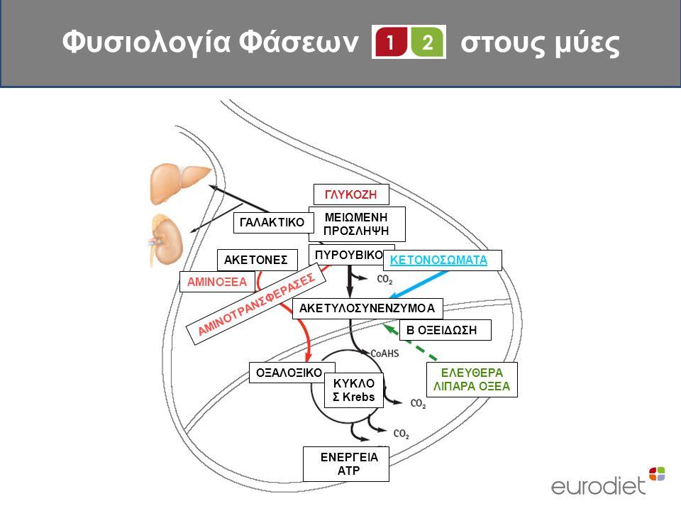 Φυσιολογία Φάσεων στους μύες