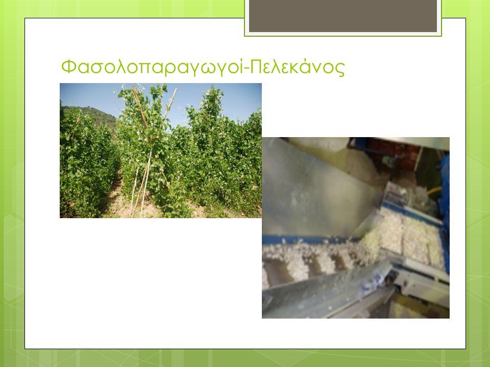 Φασολοπαραγωγοί-Πελεκάνος