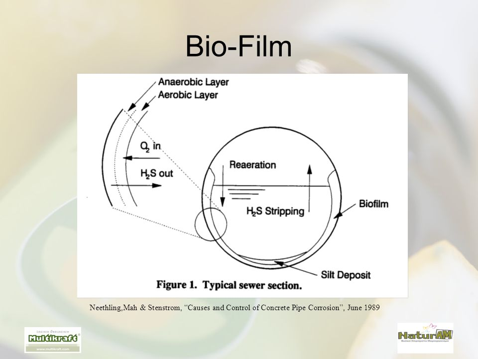 Bio-Film Neethling,Mah & Stenstrom, Causes and Control of Concrete Pipe Corrosion , June 1989