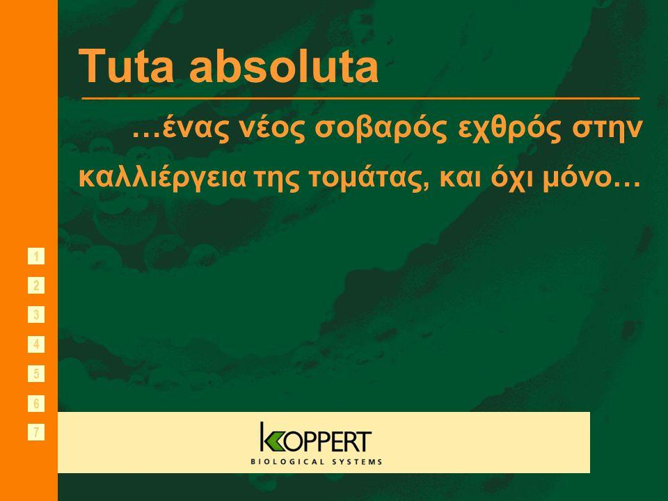 Tuta absoluta …ένας νέος σοβαρός εχθρός στην καλλιέργεια της τομάτας, και όχι μόνο…