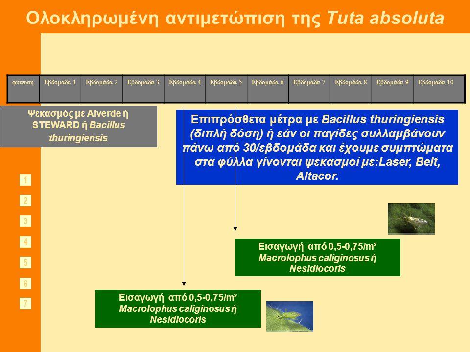 Ολοκληρωμένη αντιμετώπιση της Tuta absoluta