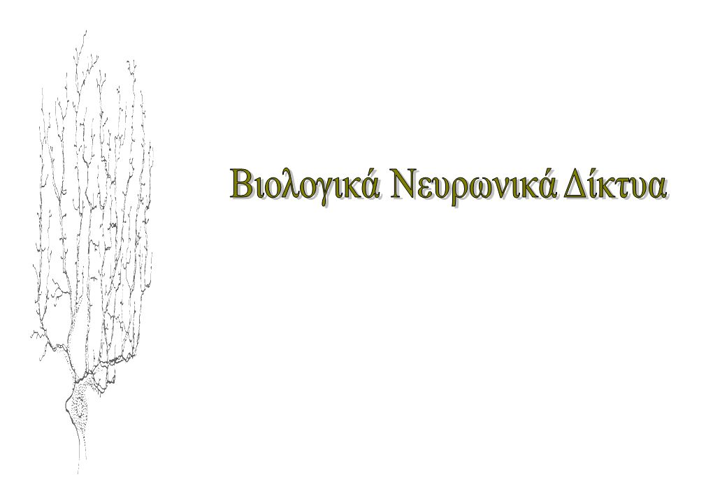 Βιολογικά Νευρωνικά Δίκτυα