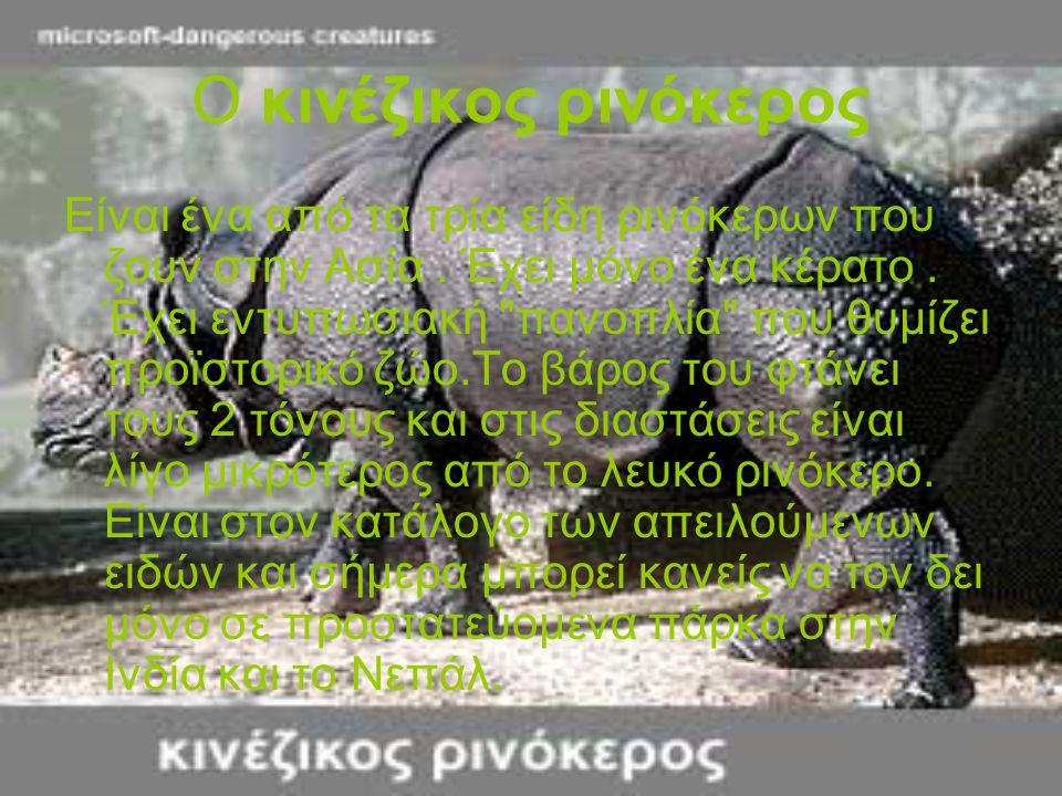 Ο κινέζικος ρινόκερος