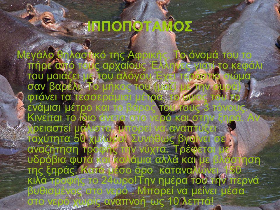 ΙΠΠΟΠΟΤΑΜΟΣ