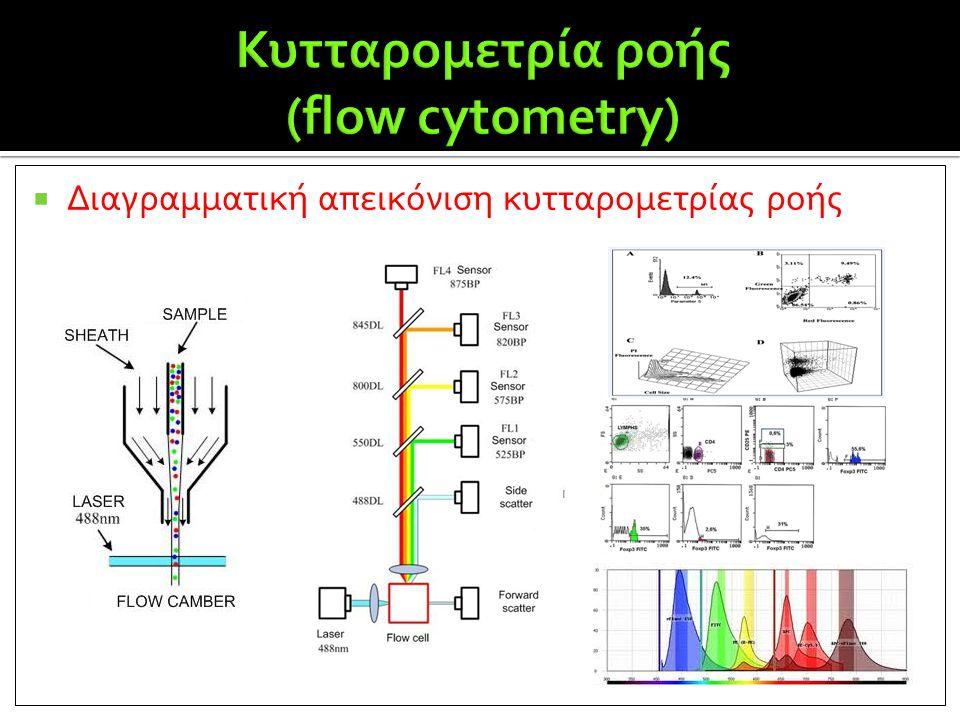 Κυτταρομετρία ροής (flow cytometry)