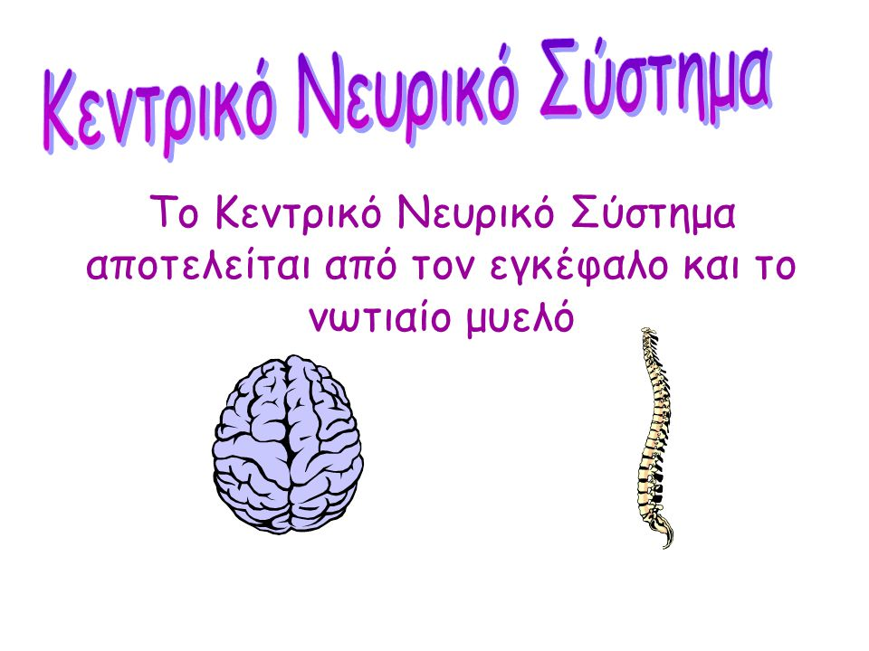 Κεντρικό Νευρικό Σύστημα