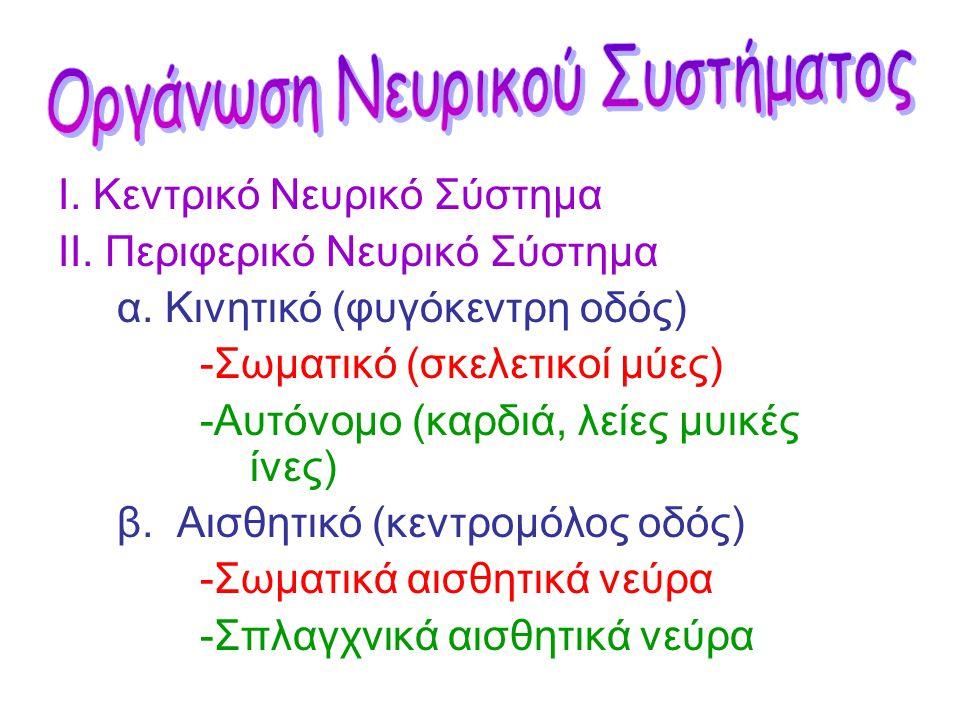 Οργάνωση Νευρικού Συστήματος