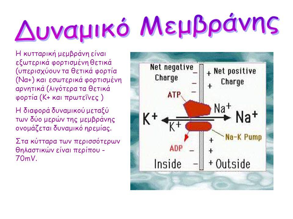Δυναμικό Μεμβράνης