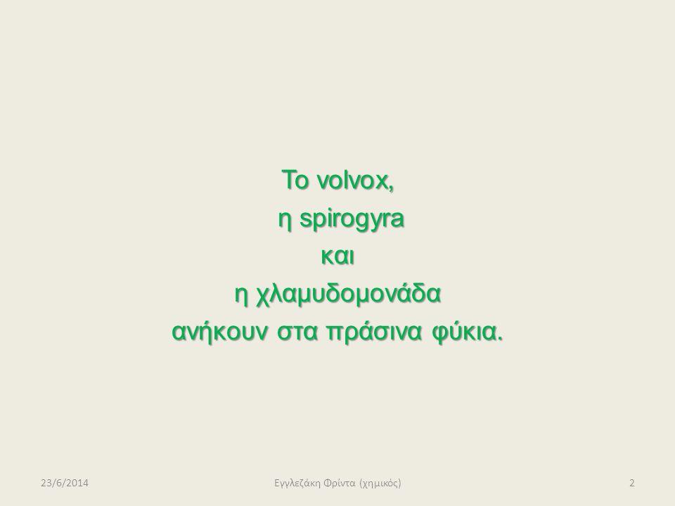 Το volvox, η spirogyra και η χλαμυδομονάδα ανήκουν στα πράσινα φύκια.