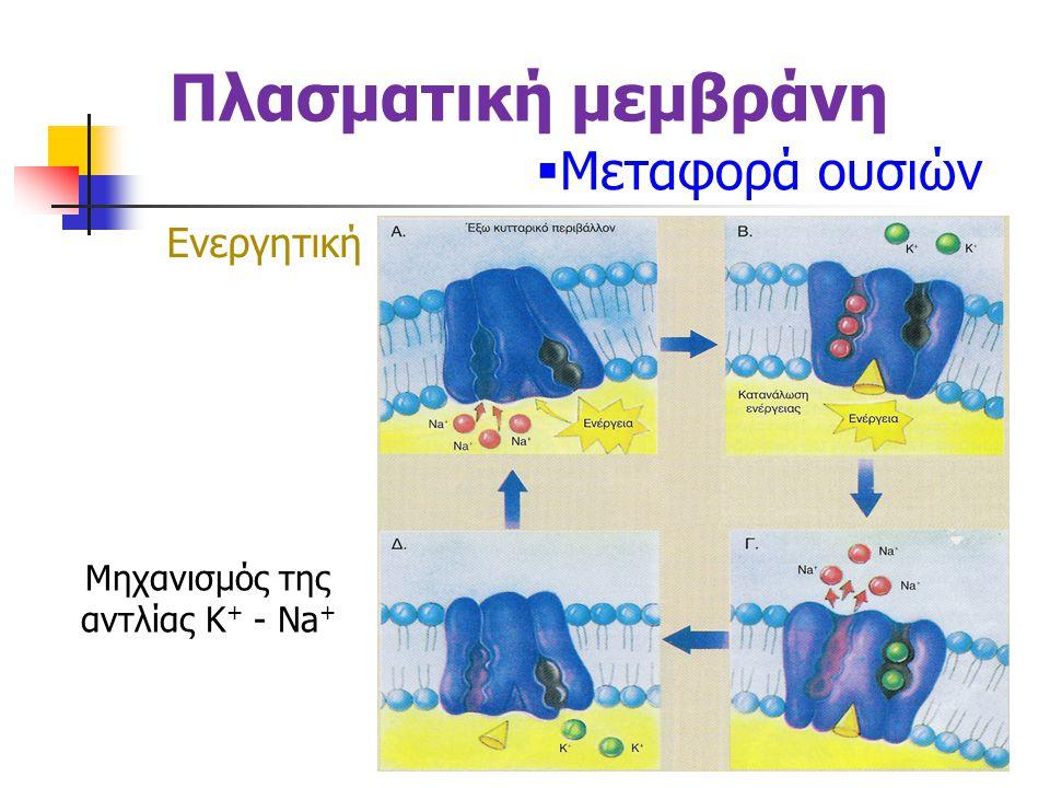 Μηχανισμός της αντλίας K+ - Na+
