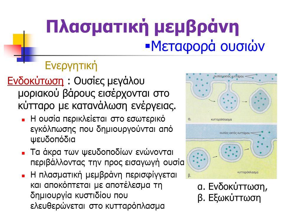 Πλασματική μεμβράνη Μεταφορά ουσιών Ενεργητική