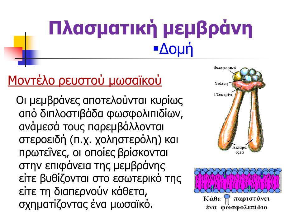 Πλασματική μεμβράνη Δομή