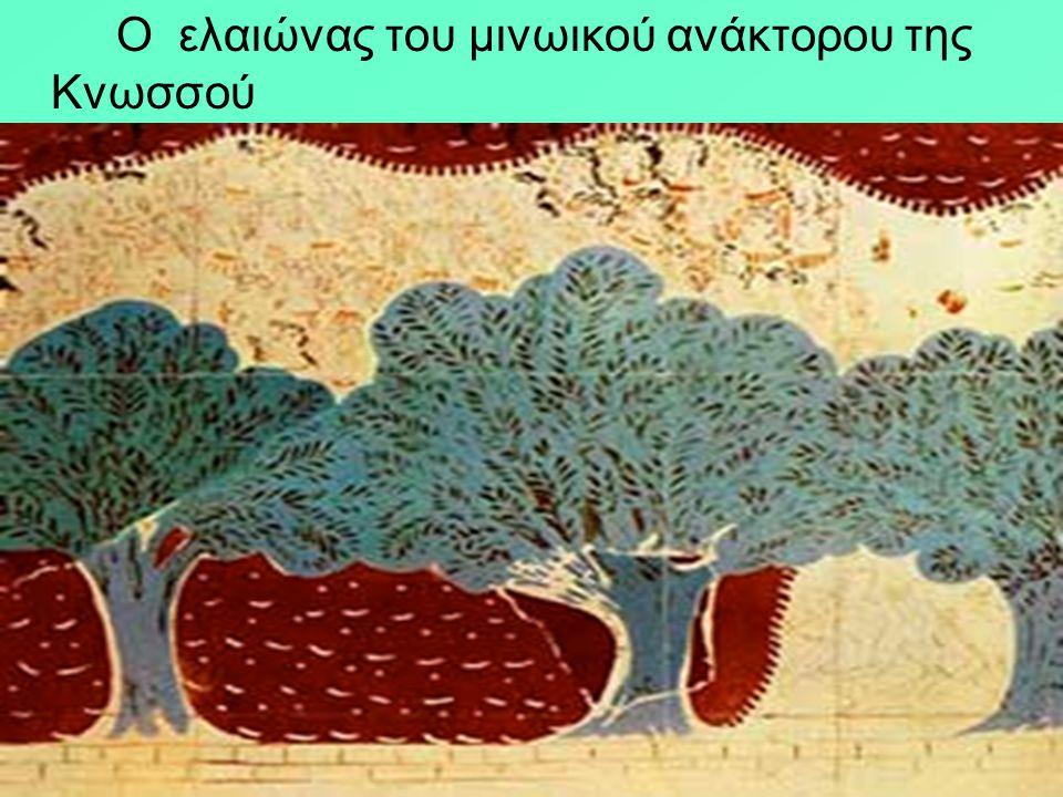 Ο ελαιώνας του μινωικού ανάκτορου της Κνωσσού