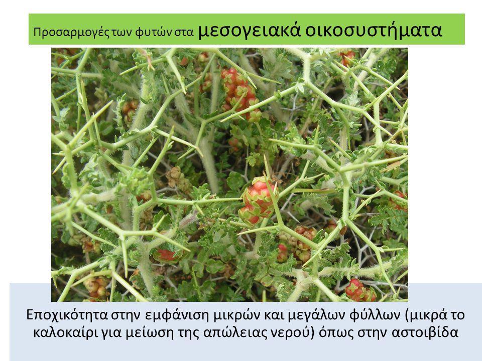 Προσαρμογές των φυτών στα μεσογειακά οικοσυστήματα