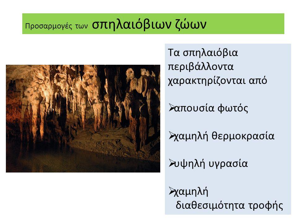 Τα σπηλαιόβια περιβάλλοντα χαρακτηρίζονται από
