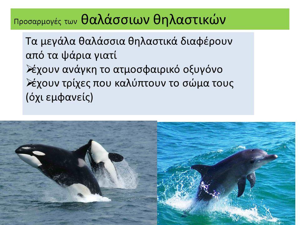 Τα μεγάλα θαλάσσια θηλαστικά διαφέρουν από τα ψάρια γιατί