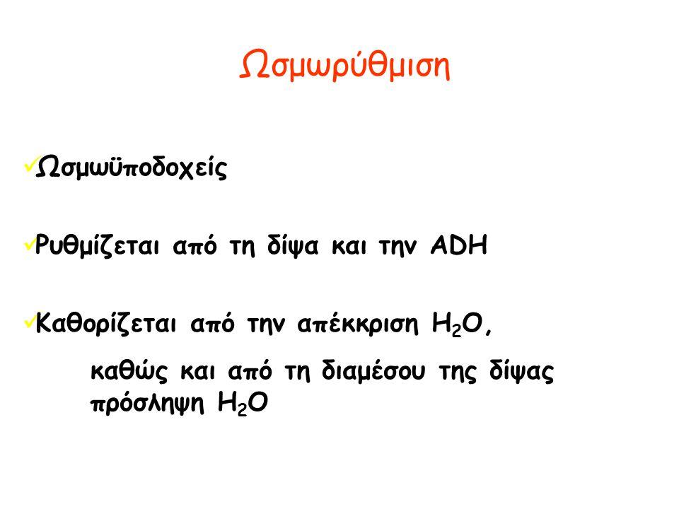 Ωσμωρύθμιση Ωσμωϋποδοχείς Ρυθμίζεται από τη δίψα και την ADH