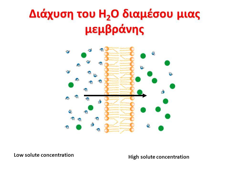Διάχυση του H2O διαμέσου μιας μεμβράνης