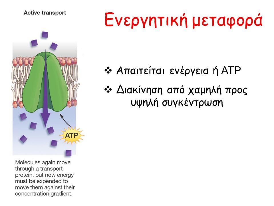 Ενεργητική μεταφορά Απαιτείται ενέργεια ή ATP