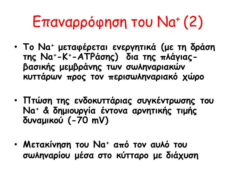 Eπαναρρόφηση του Νa+ (2)