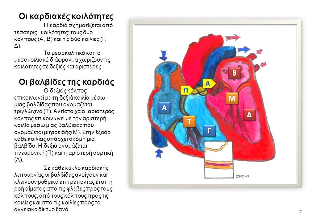 Οι καρδιακές κοιλότητες