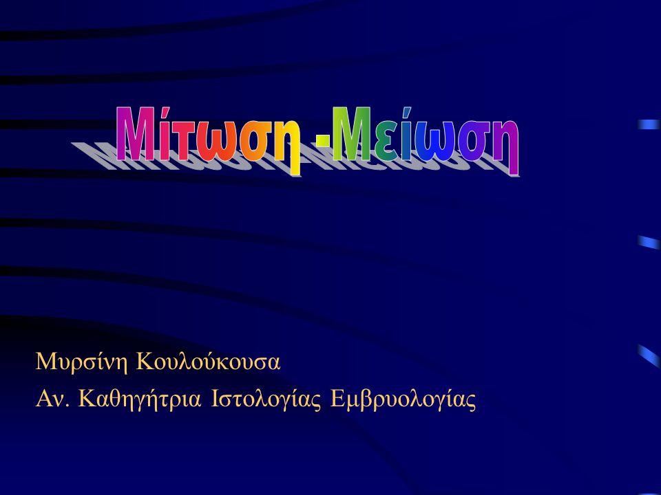Μίτωση -Μείωση Μυρσίνη Κουλούκουσα