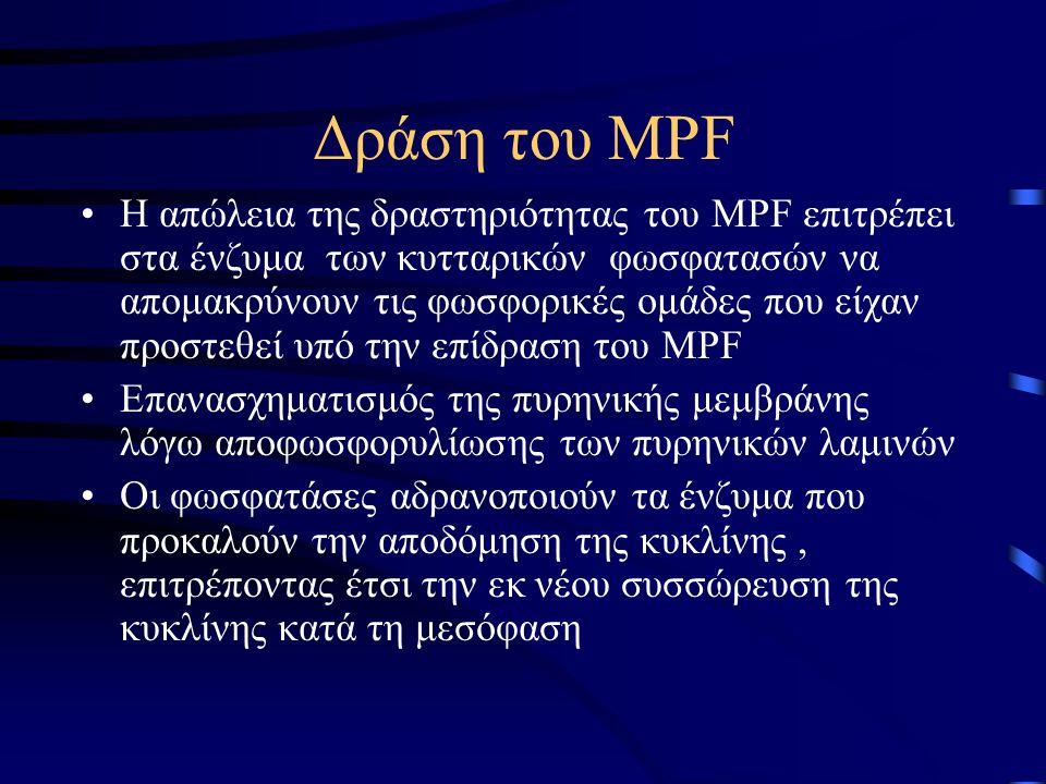 Δράση του MPF