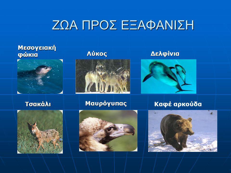 ΖΩΑ ΠΡΟΣ ΕΞΑΦΑΝΙΣΗ Μεσογειακή φώκια Λύκος Δελφίνια Τσακάλι Μαυρόγυπας