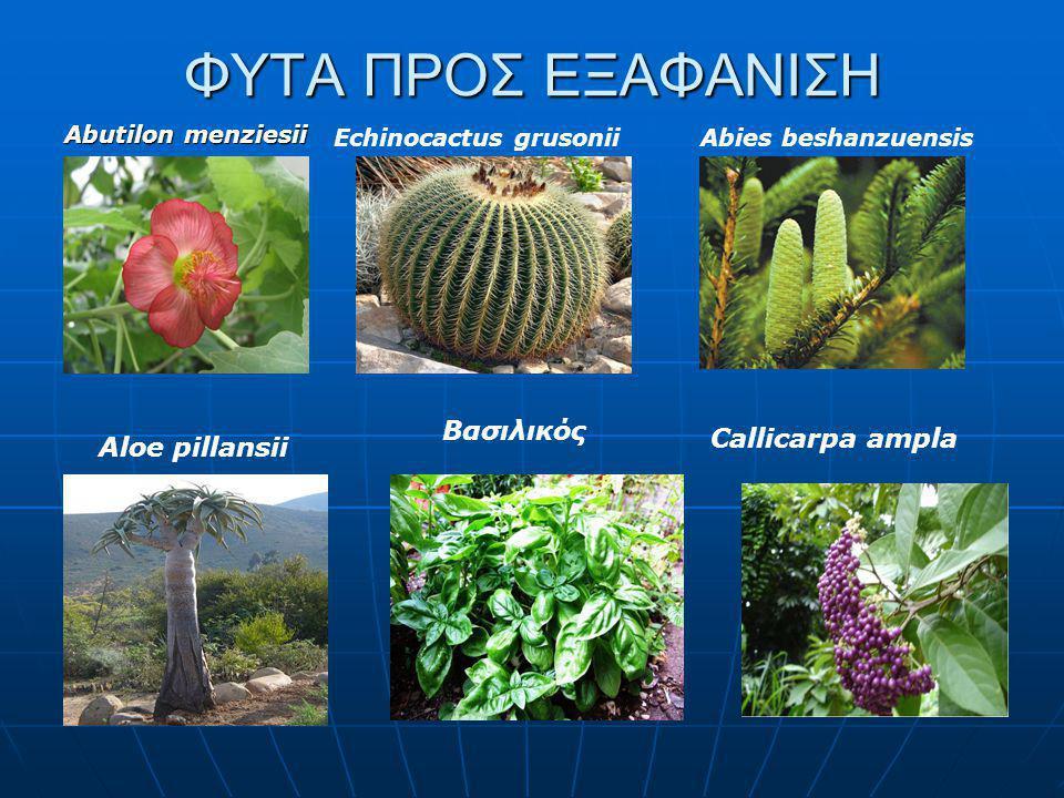ΦΥΤΑ ΠΡΟΣ ΕΞΑΦΑΝΙΣΗ Βασιλικός Callicarpa ampla Aloe pillansii