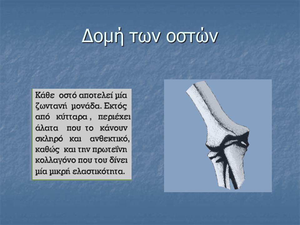 Δομή των οστών