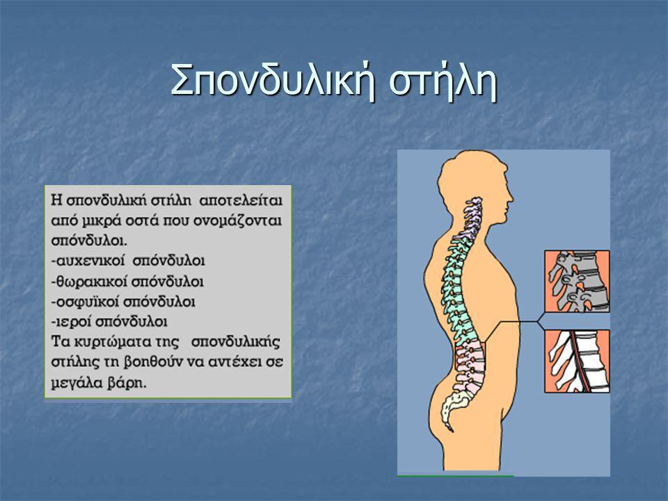 Σπονδυλική στήλη