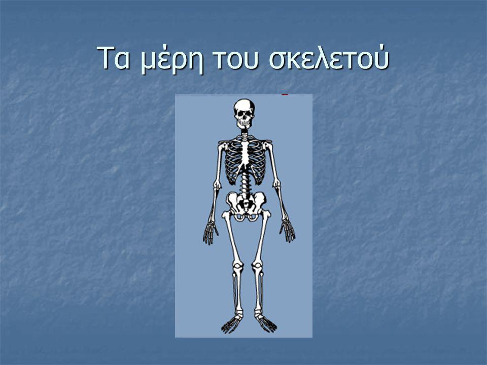 Τα μέρη του σκελετού