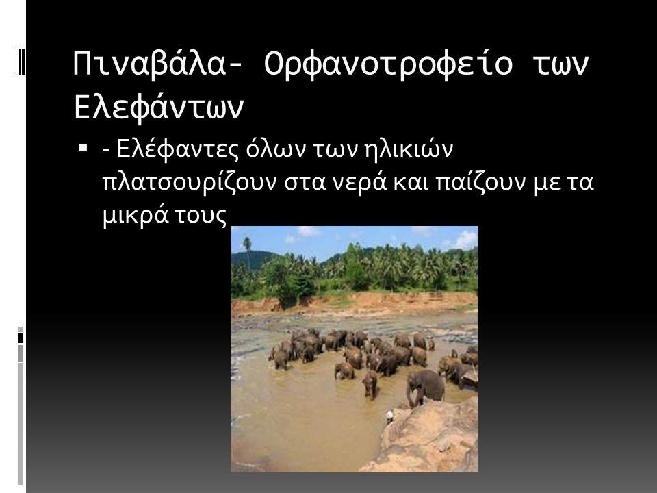 Πιναβάλα- Ορφανοτροφείο των Ελεφάντων