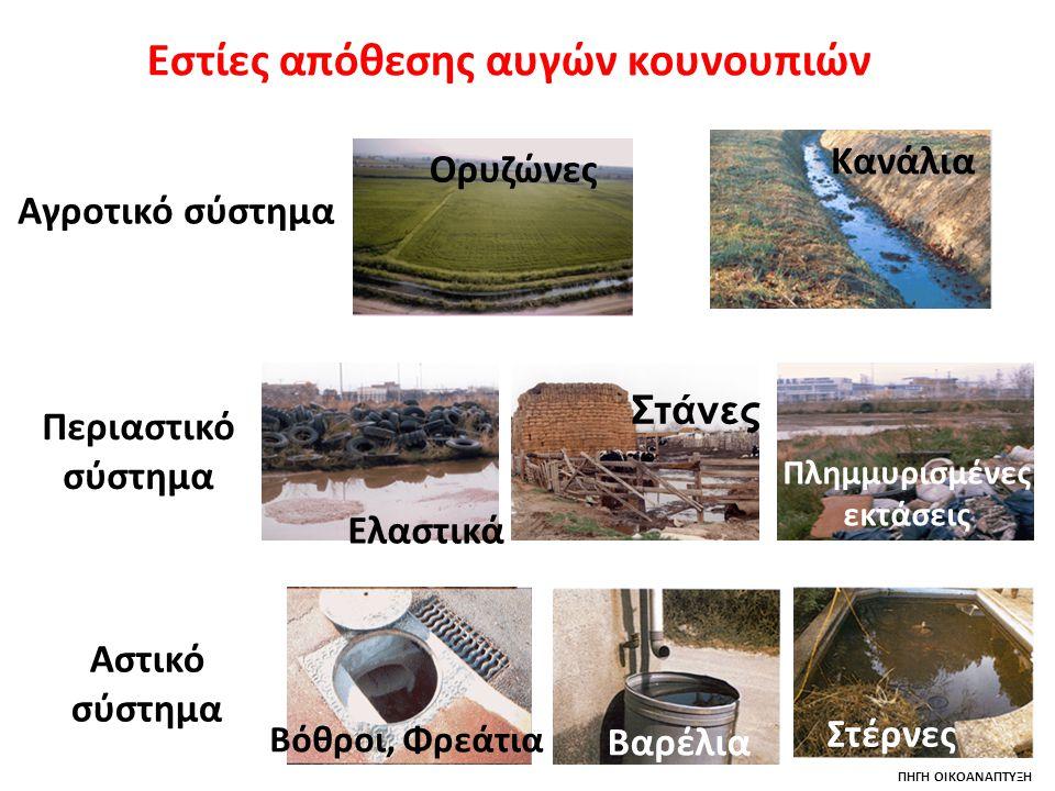 Εστίες απόθεσης αυγών κουνουπιών Πλημμυρισμένες εκτάσεις
